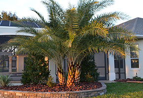Palms, Trees and Shrubs